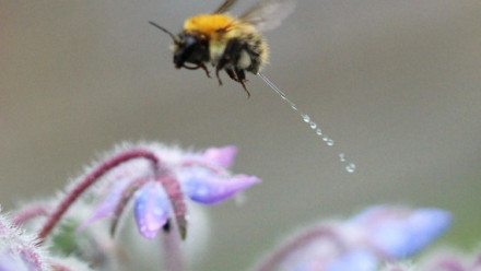 Read Bee Having a Wee Photo: Sweeps the Web