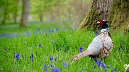 Read Shooting Wildlife with Sara Humphrey: #1 Birds