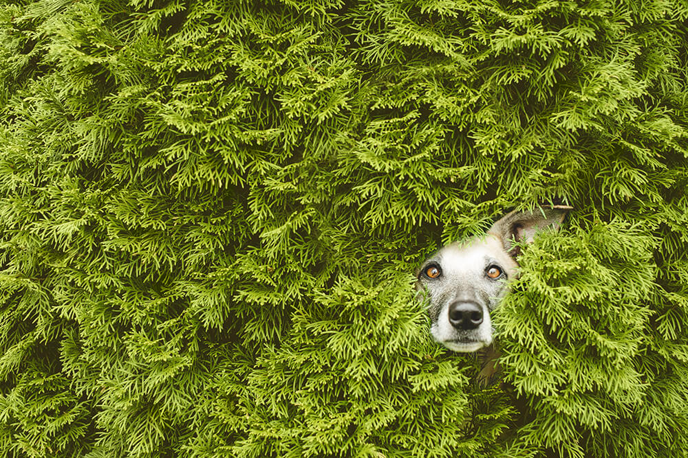 Picture copyright – Elke Vogelsang - Photography Show