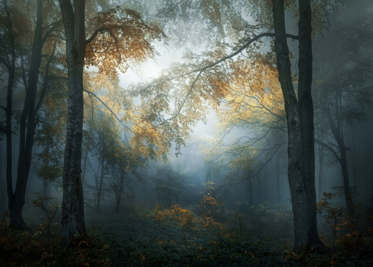 Early autumn by Veselin Atanasov. © Veselin Atanasov, Bulgaria, Open Photographer of the Year, Open, Landscape & Nature [2018 Open competition], 2018 Sony World Photography Awards