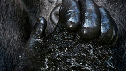 Read Tim Flach Opens 'Endangered' exhibition in London with WEX Photo Video