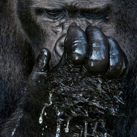 PhotoBite - Tim Flach Opens 'Endangered' exhibition in London with WEX Photo Video