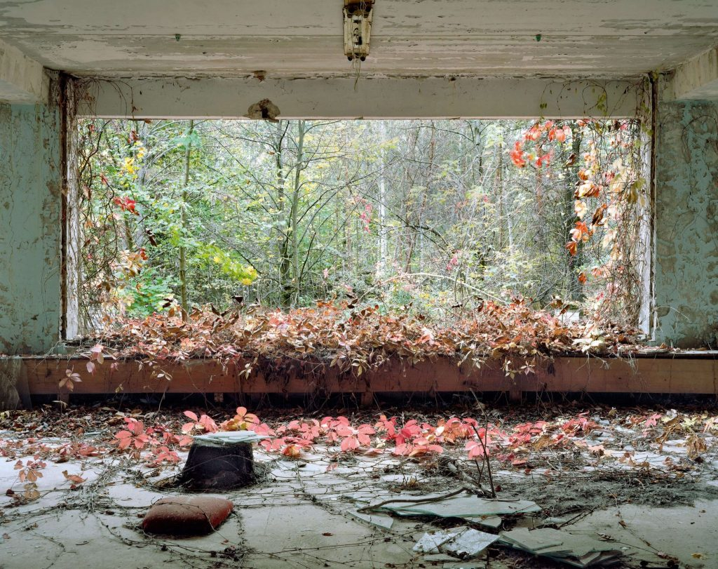 David McMillan: Growth and Decay