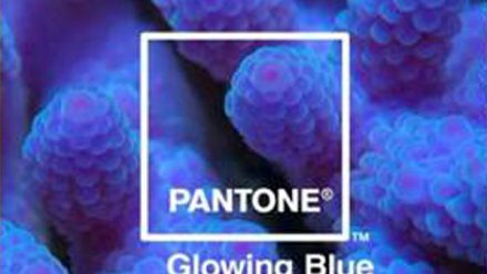 Read Adobe Partners with Pantone to Highlight Nature's 'Most Beautiful Death'