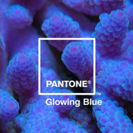 PhotoBite - Adobe Partners with Pantone to Highlight Nature's 'Most Beautiful Death'