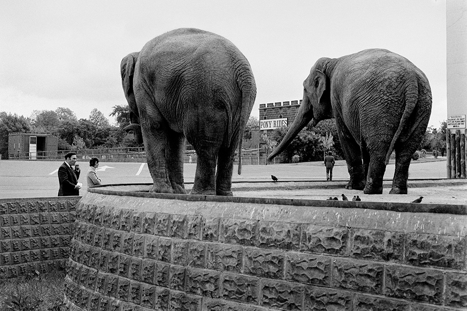 Fran May: Elephants.