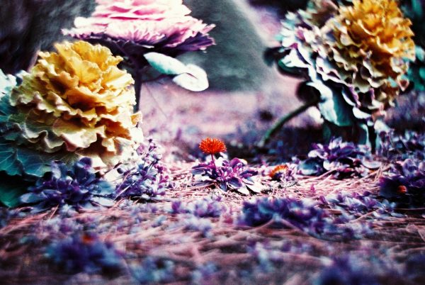Lomochrome Purple 35mm Film example 6
