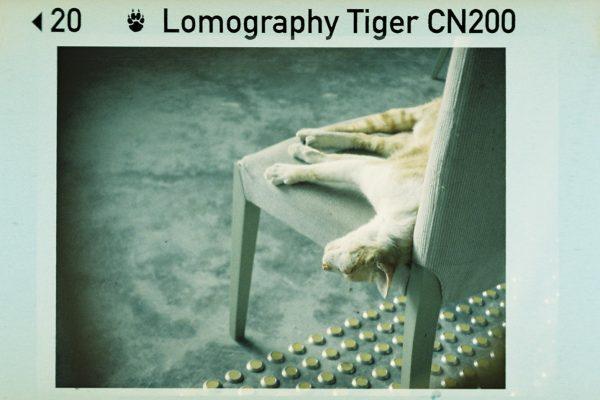 Color Tiger CN 110 ISO 200 sample shot 7