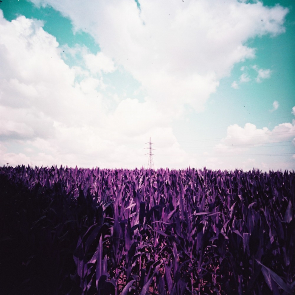 lomochrome purple 120 sample 2