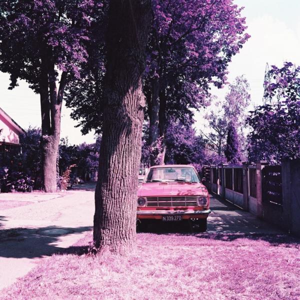 lomochrome purple 120 sample 3