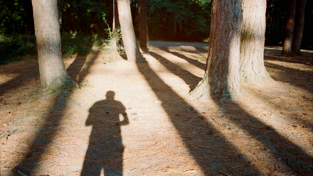 Read A Day in the Woods: Testing Lomography Color Negative 400 Film