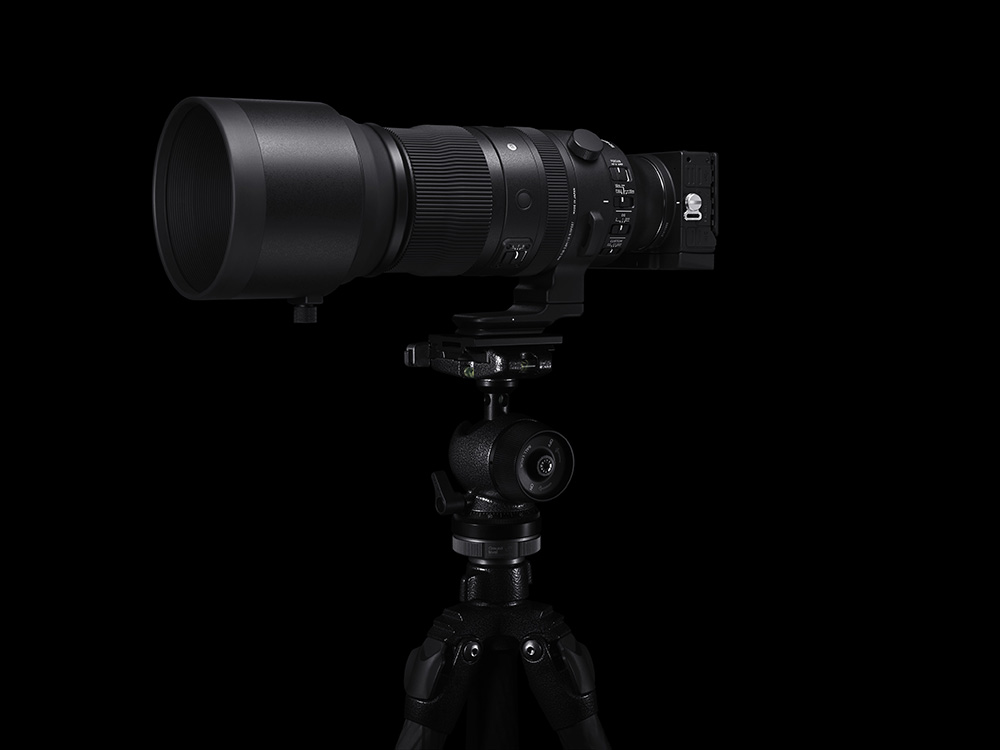 Sigma 150-600mm with Sigma FP